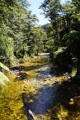Während der Wanderung durch den Abel Tasman Park
