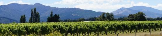 Die Weingebiete im Wairau Valley