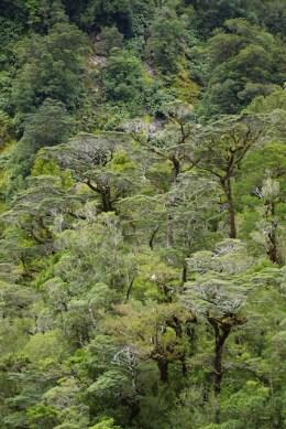 """Die Beech-Trees waren die Vorlage für die """"Ents"""" in LOTR"""