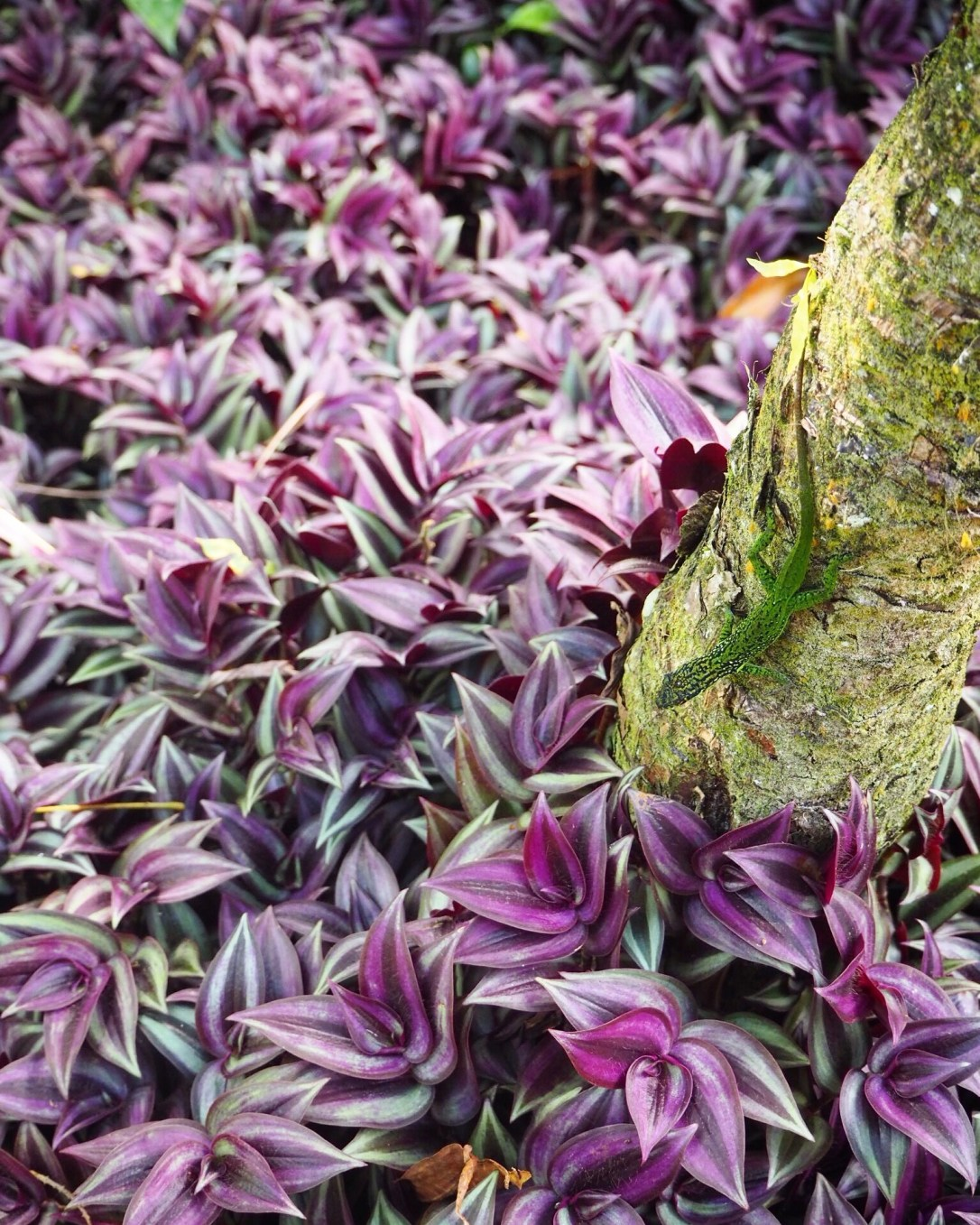 Stunning colours of leaves and lizards in Martinique