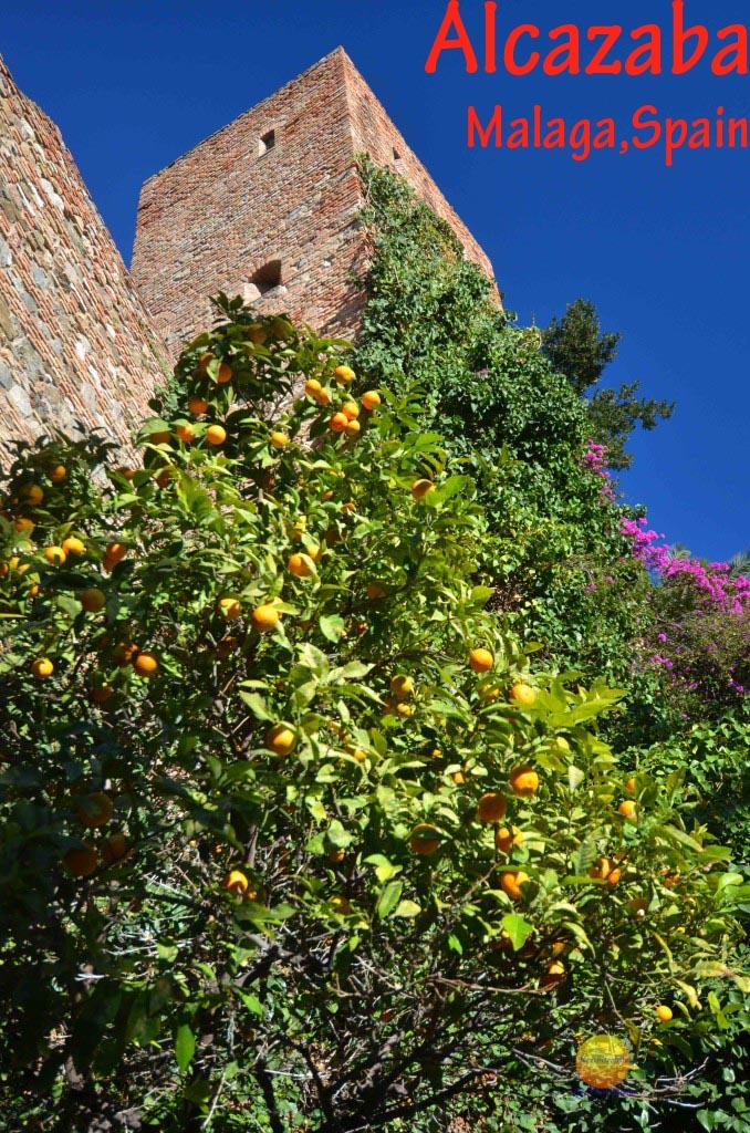 alcazaba tower with orange trees