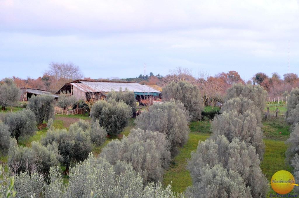 views from poggio dei cavalieri