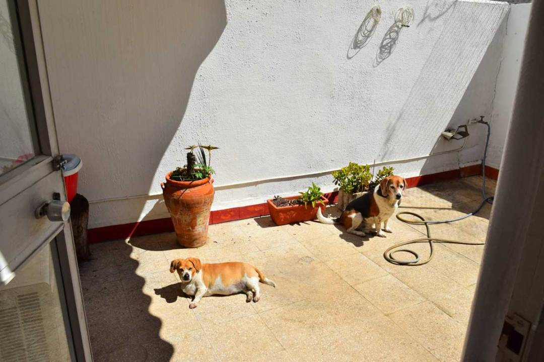 dogs lying on patio