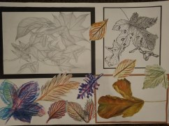 Studies into fallen leaves I found