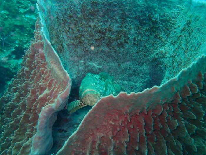 Crevettes et mérous