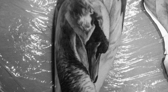 Black Swan - Grace Under Pressure