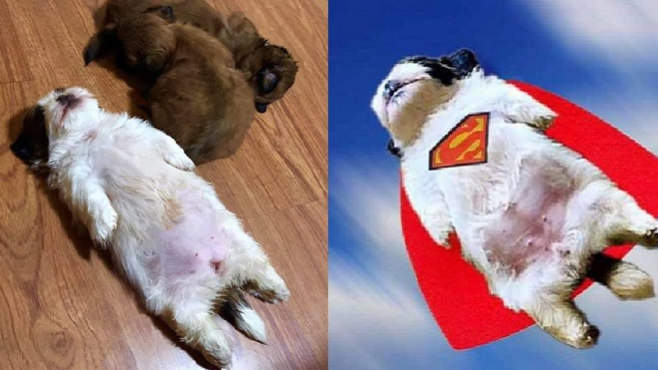 224 Sleepy Dogs Who Re Definitely Not Letting You Sleep In Your