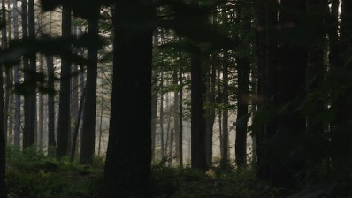 Forests #4