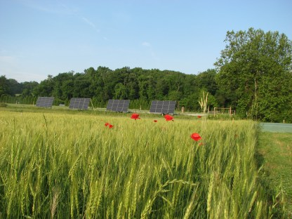 solar panels and wheat at work gathering sun's energy