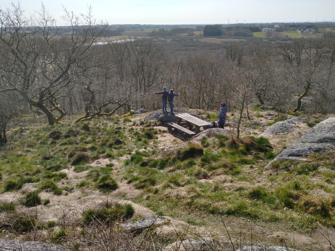 Allingewald
