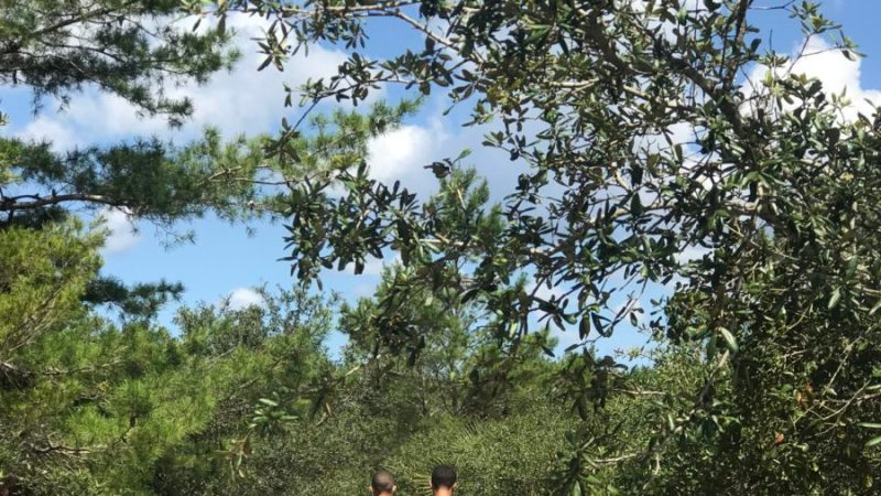 3 Best Things to do in Ocala