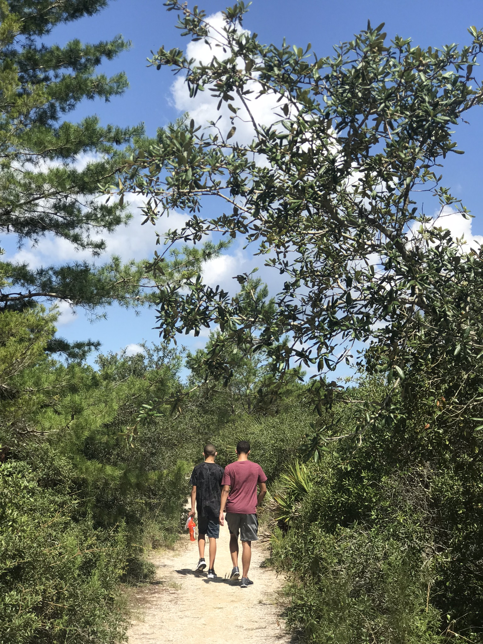 hiking trails in ocala national forest