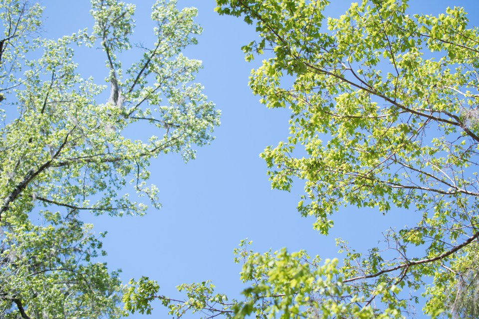 trees in the blue sky