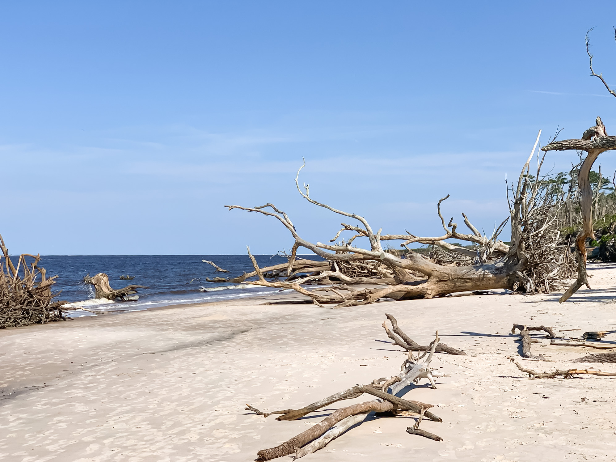 boneyard beach Big Talbot Island State Park