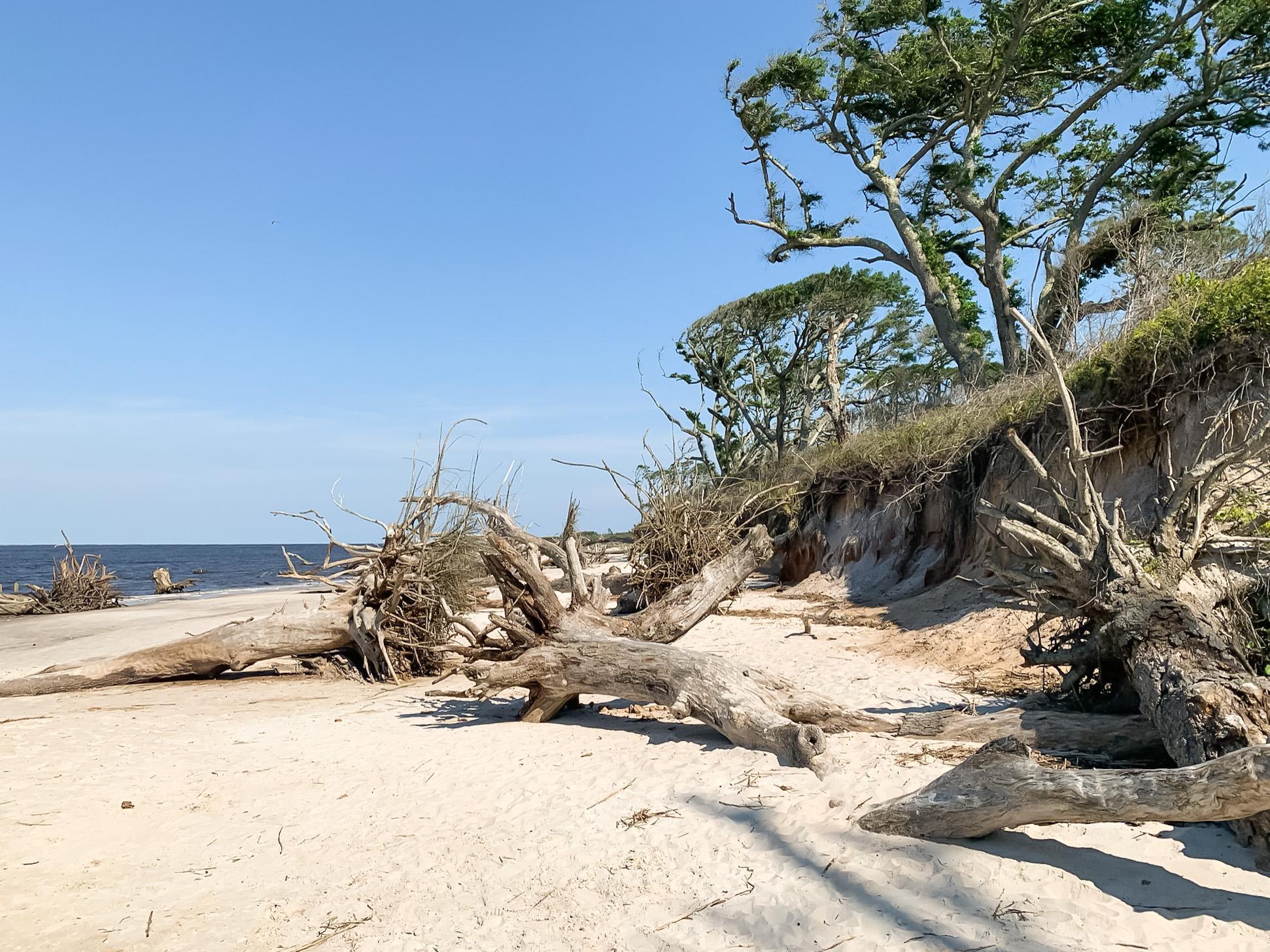 Boneyard Beach in Florida
