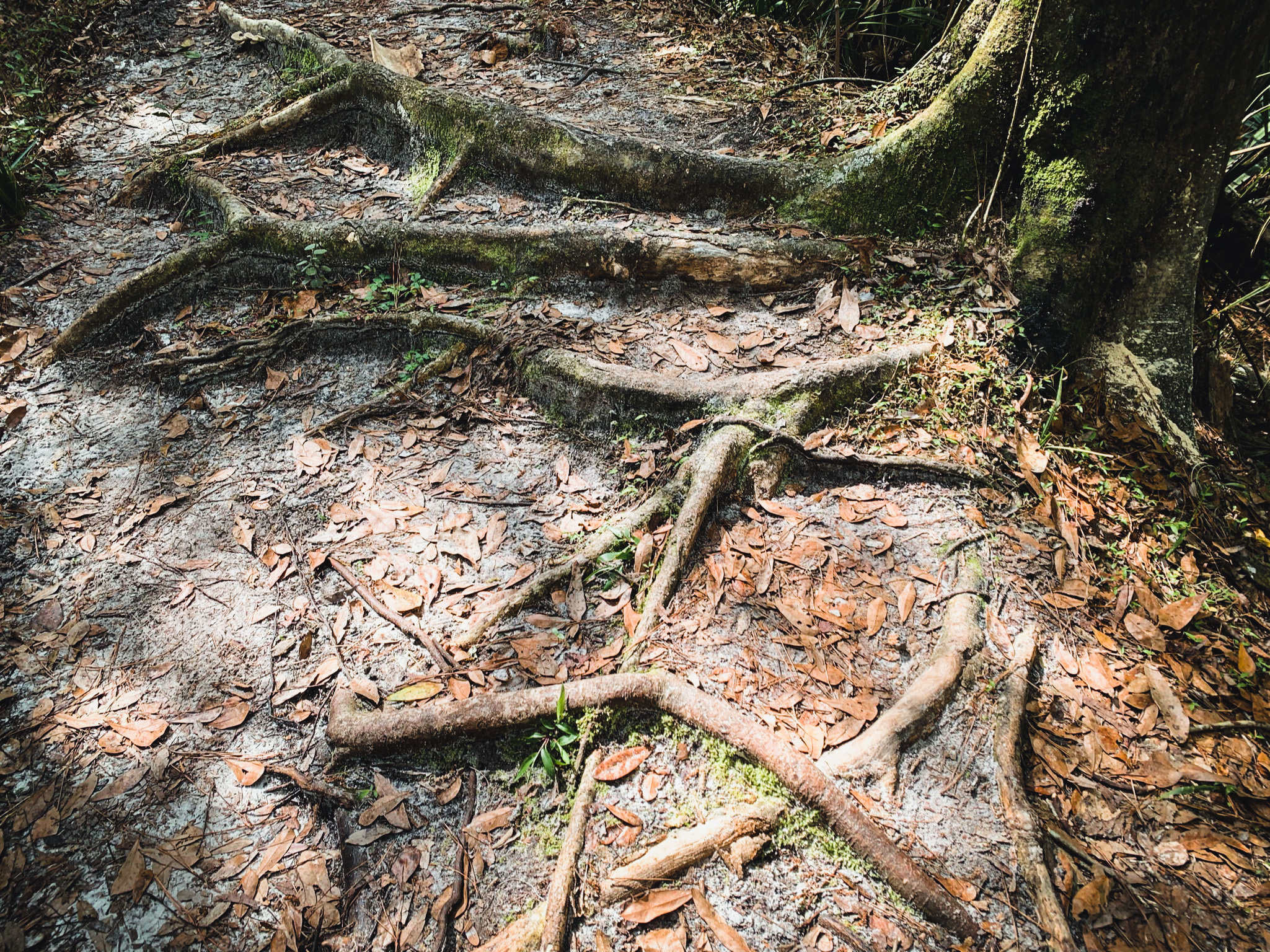 rooted trail on black bear wilderness area