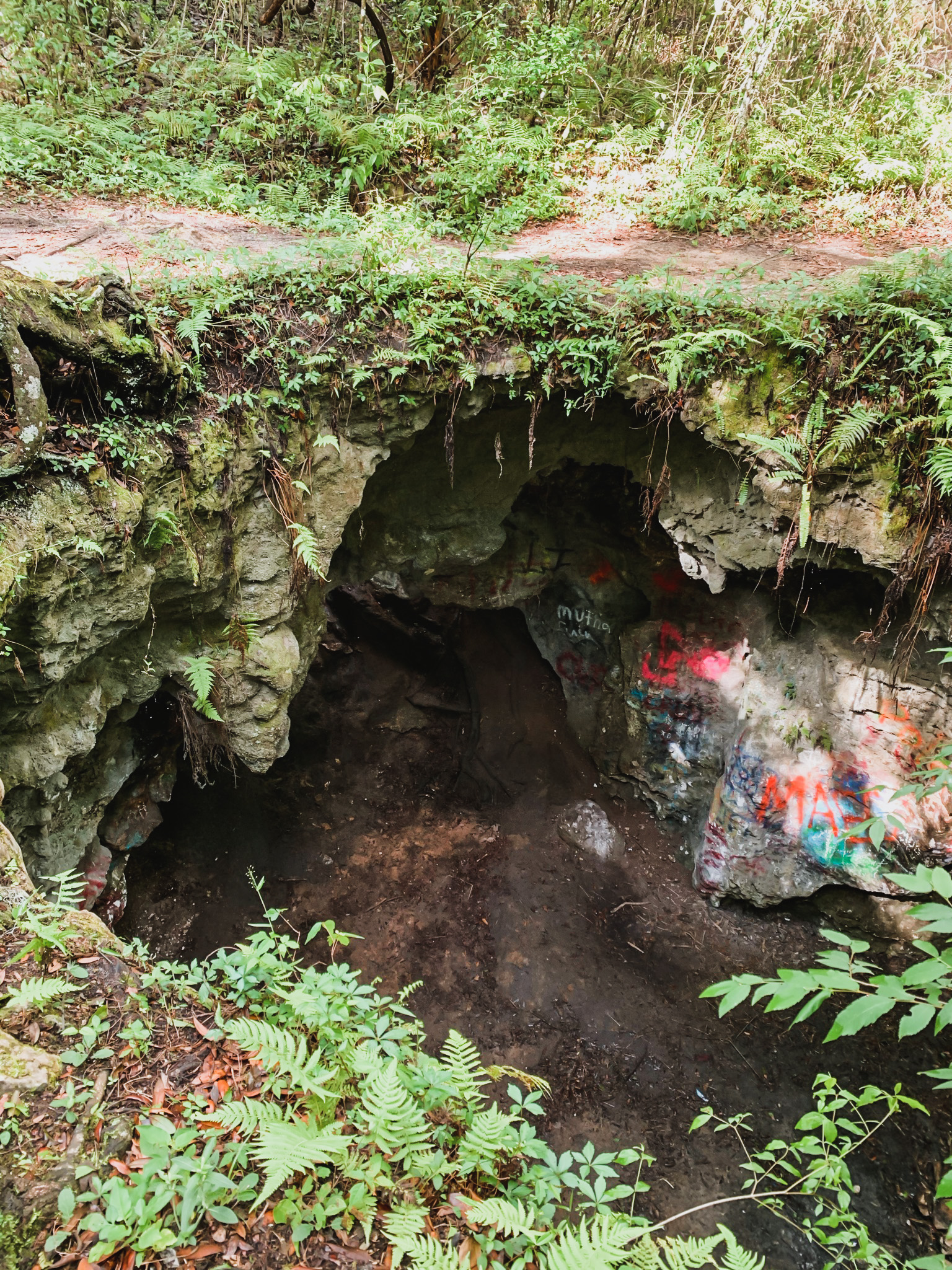 dames cave in Withlacoochee State Forest.