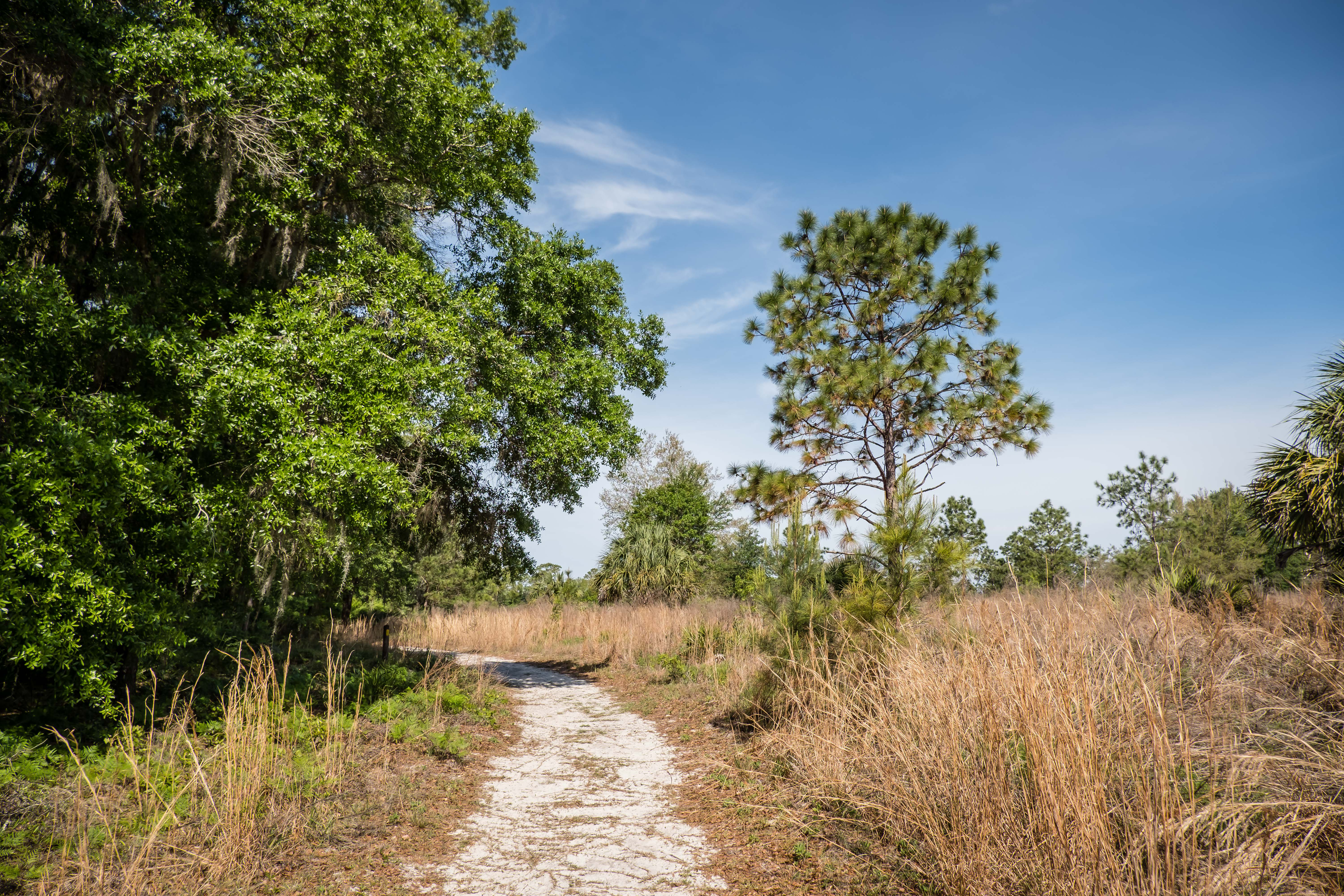 hiking trails in Rainbow Springs