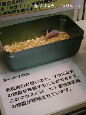 放医研マウスふれあい6