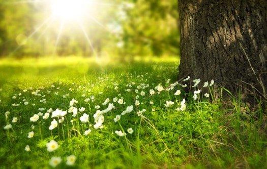 Fleurs au pied d'un arbre baignées de lumière, source d'énergie et de bien-être