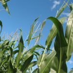 Farm and Environmental Organizations Rebuke New USDA Regulatory Review