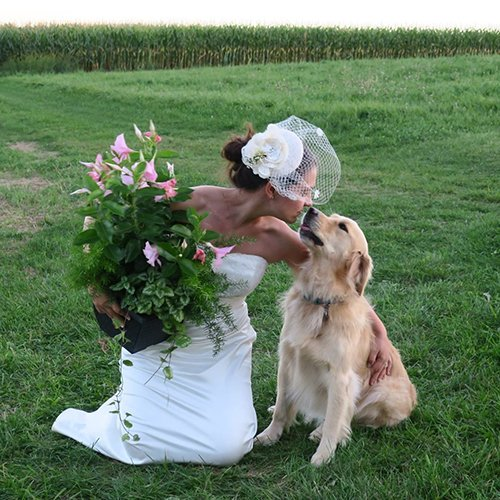 Wedding photo of bride with her happy Golden Retriever
