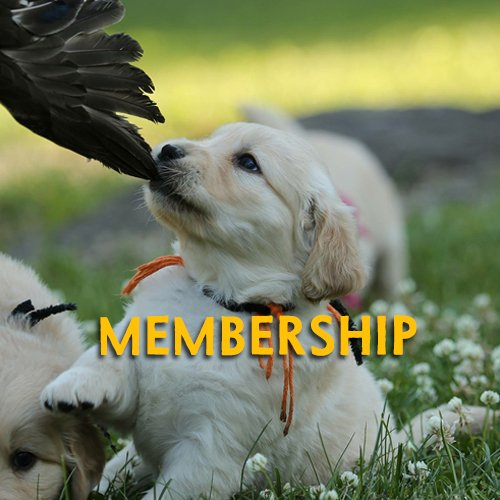 Northern Flyway Golden Retriever Club Home Page Membership Button