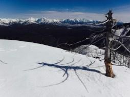 a tree on glacier view