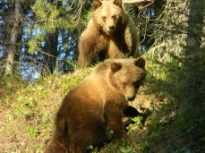 Two grizzly cubs from Pat Cole