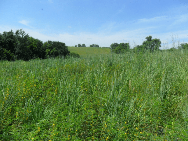 Considering CRP Grasslands Enrollment? There's Still Time.