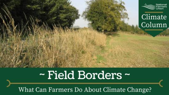 field-borders