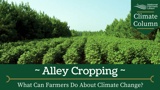 What Can Farmers Do About Climate Change? Alley Cropping