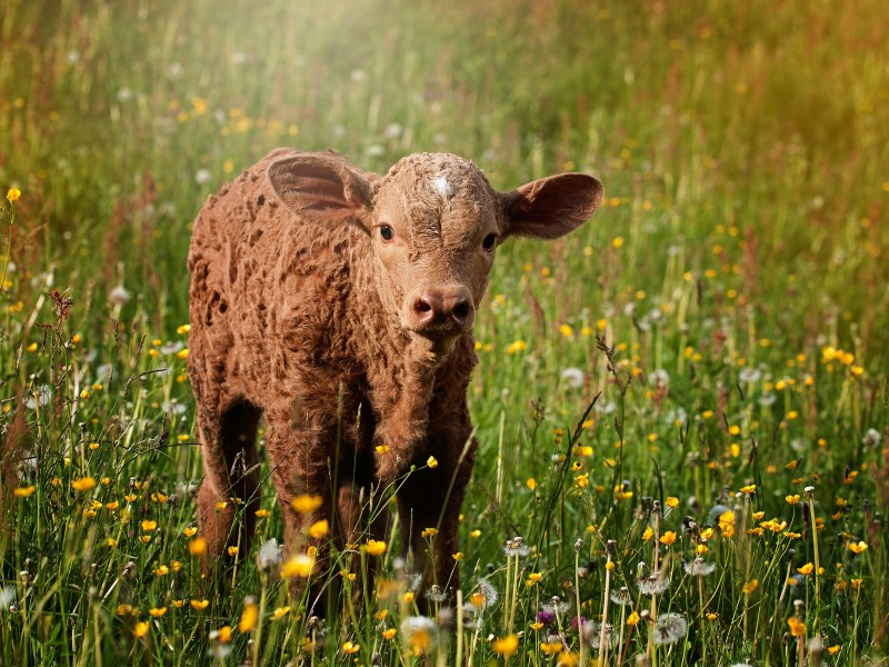 What Can Farmers Do About Climate Change? Forage and Biomass Planting