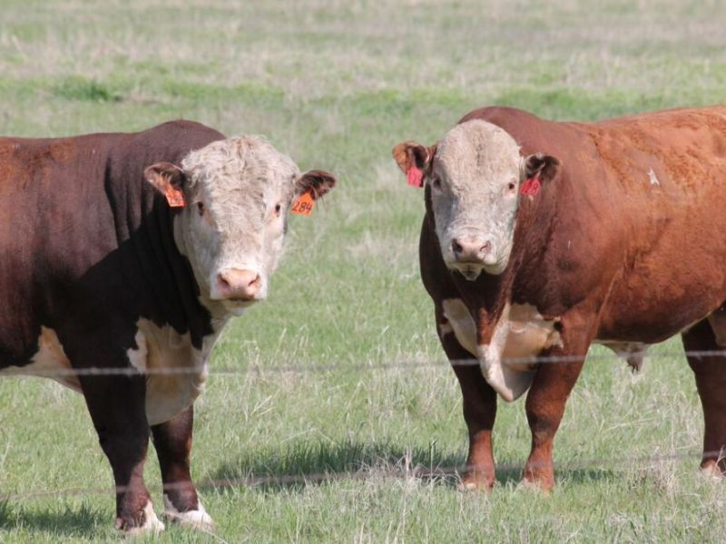 Access to Efficiency: Kolousek Family & Intensive Grazing