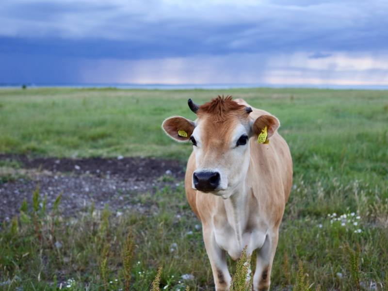 What Do Farmers Need to Know About Climate Change? Markets for Climate-Smart Ag Products in Missouri
