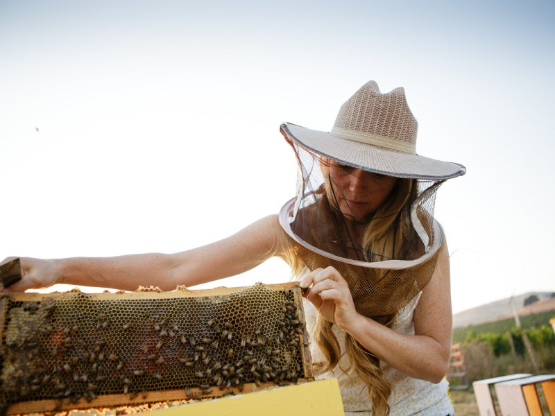 Regenerative Agriculture Unites Ranchers and Beekeepers