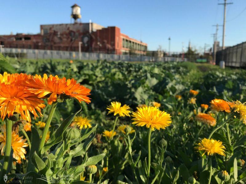 Food Safety Spotlight: Introducing Keep Growing Detroit