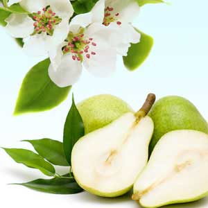 Scents of Spring: Asian Pear and Lily Fragrance Oil