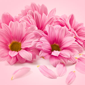 Scents of Spring: Petals of Spring Fragrance Oil