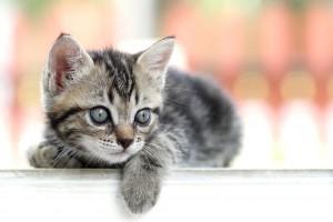 catnip uses