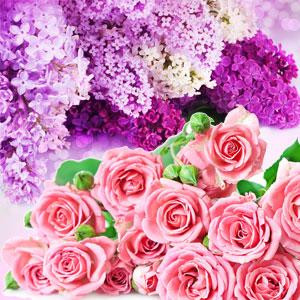 rose & violet type fragrance oil