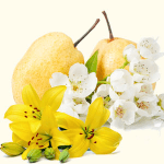 asian-pear-lily