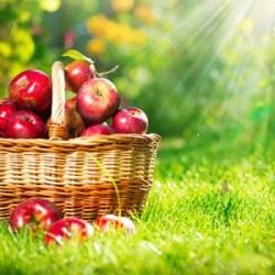 Apple Aromas