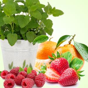 Citronella Berry Fragrance Oil