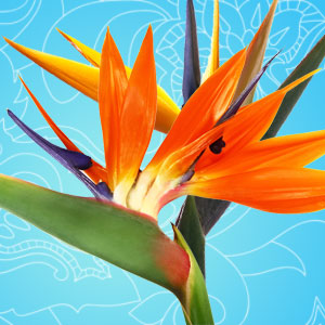 What Are the Best Scents for Summer: Birds of Paradise Fragrance Oil