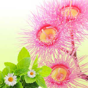 Most Popular Spa Fragrance Oils Eucalyptus & Spearmint Fragrance Oil