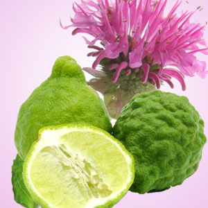 Best Spicy Fragrance Oils: Gingered Bergamot Fragrance Oil