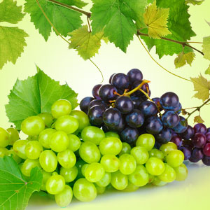 Grape Fragrance Oil