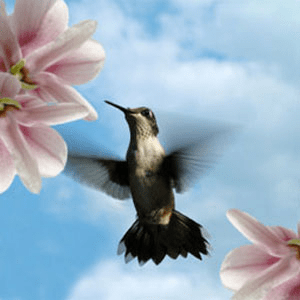 Denise's Favorite Fragrance Oils: Hummingbird