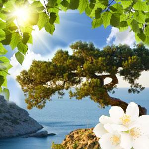 ozone scent Archives - Natures Garden Fragrance Oils